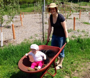 IHCC-Metro State Community Garden