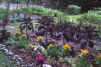 IHCC-community-garden