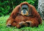 Tropical Rainforest Heritage of Sumatra