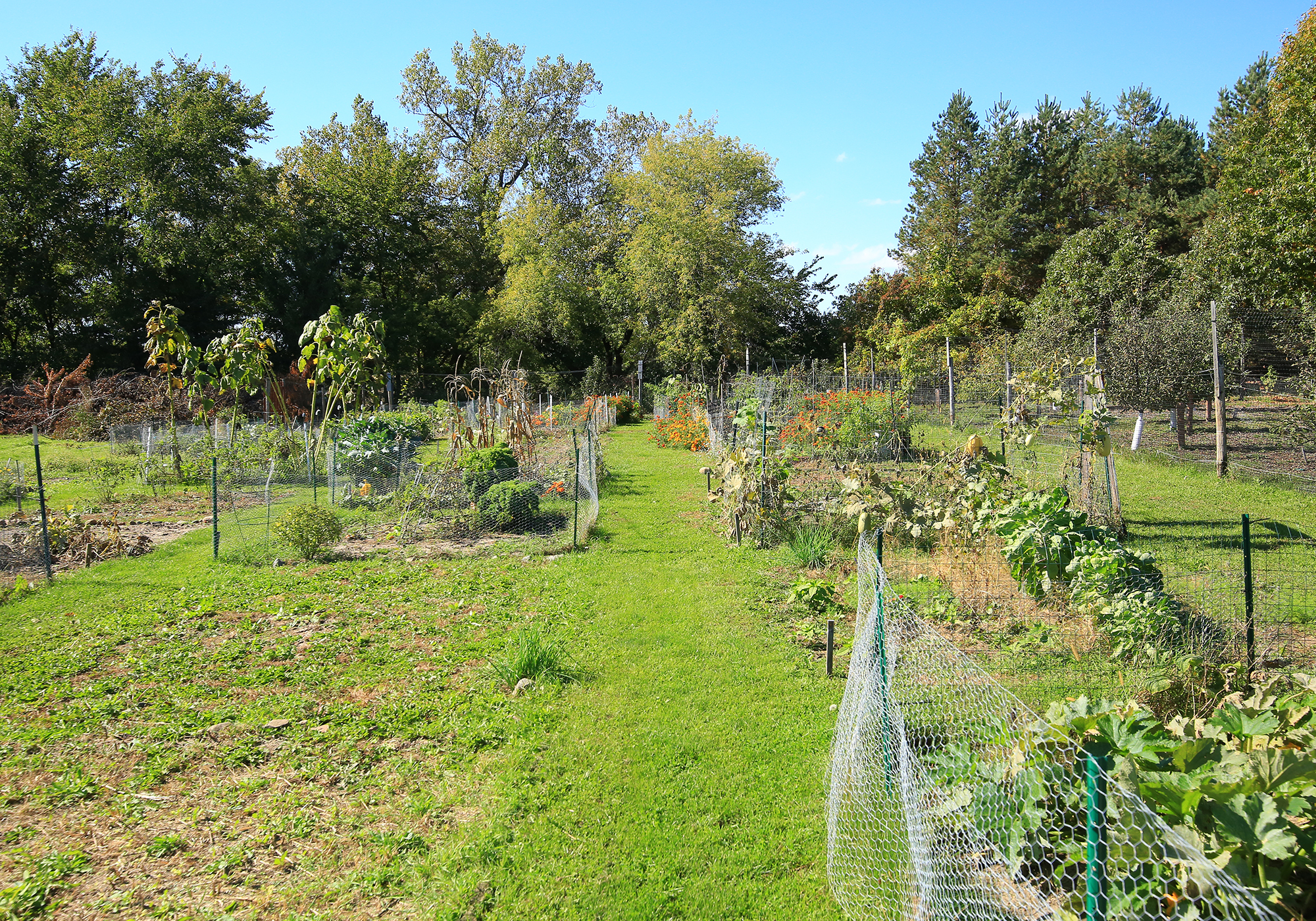 inver hills metro state community garden seeking republic services grant inver hills news