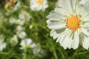 Inver Hills-Metro State Community Garden Seeking Republic Services Grant