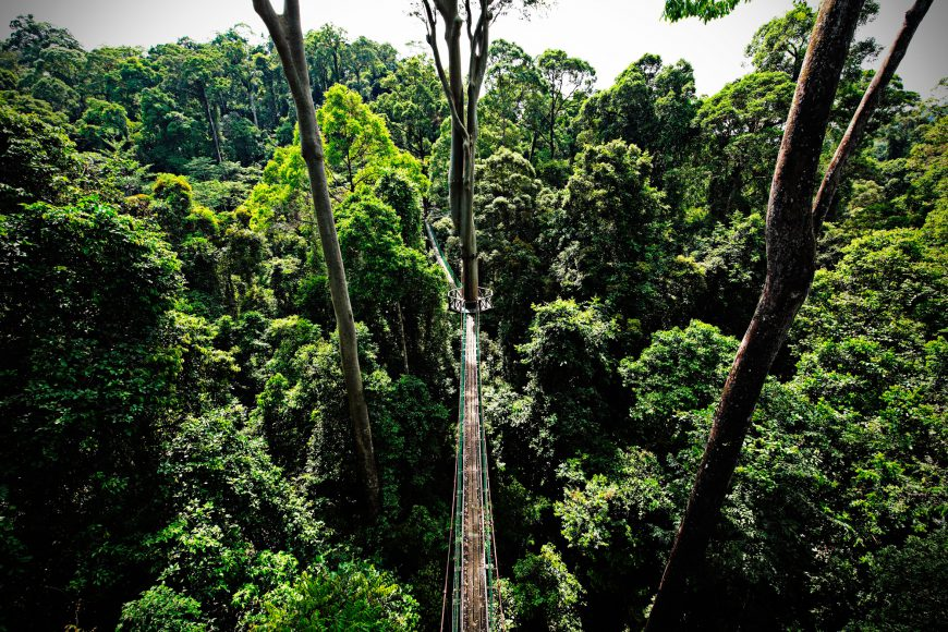 Sandakan rainforest