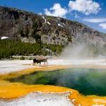 aaa_yellowstone