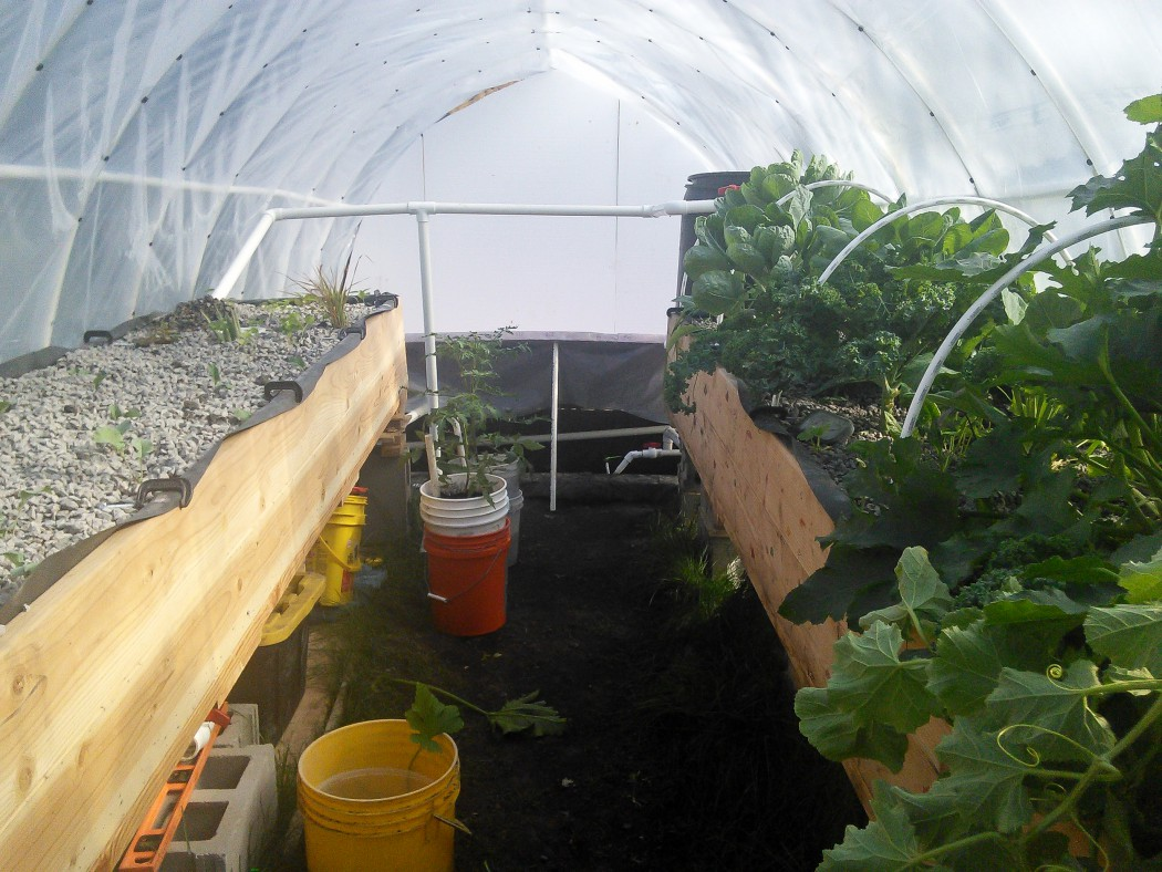 Matthew's aquaponics greenhouse
