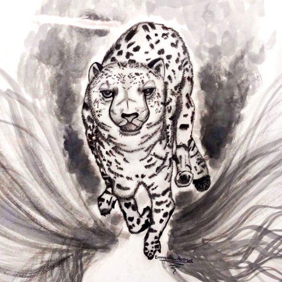 bbb_cheetah